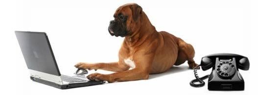 dog-on-computer_cropped
